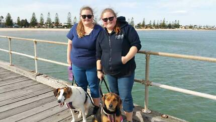 Pet sitter and dog walking services