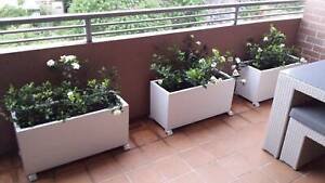 Set of 3 x Planter boxes Bronte Eastern Suburbs Preview
