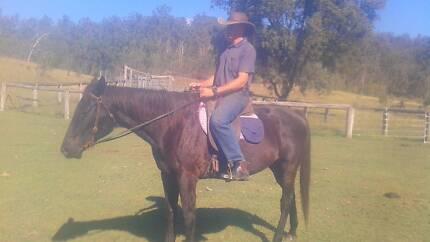 Black gelding