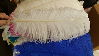 Rent Ostrich Feathers  /  Wedding, Centerpieces,Great Gatsby, Party, Rental