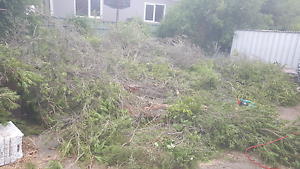 Free firewood today only Hillcrest Logan Area Preview