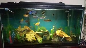 Fish tank (comes with everything!) Kitchener / Waterloo Kitchener Area image 3