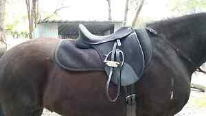 17.5 dressage saddle synthetic Albany Albany Area Preview