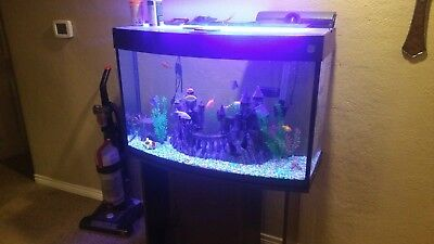PENN PLAX LUXURY is the ultimate 250 liter / 65 gallon aquarium W decor - $1000