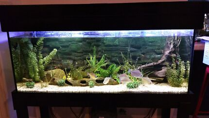 4 Foot Fish Tank Complete Set Up Bicton Melville Area Preview