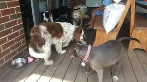 Berwick Dog Walking and Training Service Berwick Casey Area Preview