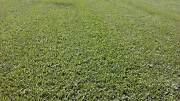 -Turf Sale $3.50p/m order  only  pick up Caboolture Caboolture Area Preview