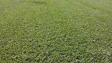discount turf & plants Elimbah Caboolture Area Preview