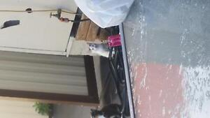 Hi there 2 free kittens Ready 4 pick up from Carlton Cronulla Sutherland Area Preview
