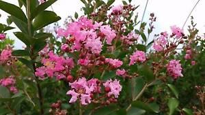 River Road Nursery - Canberra - Wholesale Plants Oaks Estate Queanbeyan Area Preview