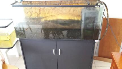 7 year old turtle with 4 ft tank Old Noarlunga Morphett Vale Area Preview