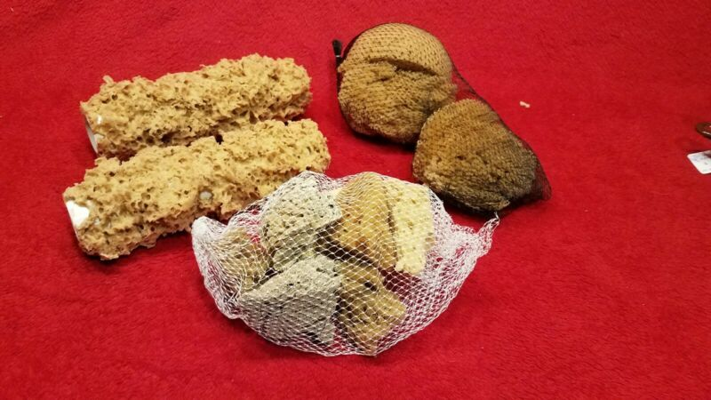 2 Unbleached Sea Sponge Rollers & Various Sea Sponge Lot 12 Pieces Total