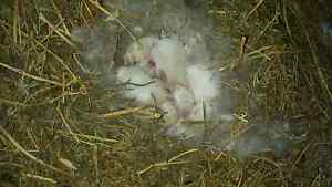 Baby bunny Tenterfield Tenterfield Area Preview