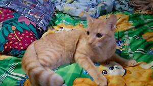 Selling male cat. (Eggy) West End Brisbane South West Preview