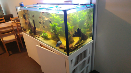 5 foot by 2 foot by 2 foot with lids  Fish tank fish