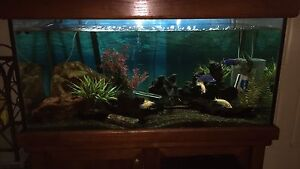 Fish Tank Coombabah Gold Coast North Preview