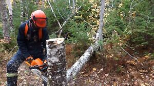 Chainsaw Operator for Hire