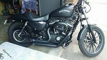 2014 harley davidson iron Morley Bayswater Area Preview