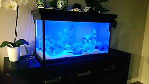 Fish Tank **SALE.. WANT TO SELL** Byford Serpentine Area Preview