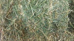 Prime lucerne hay Canowindra Cabonne Area Preview