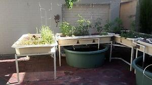 Aquaponics 4 bed system Mitcham Mitcham Area Preview