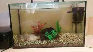 Fish Tank, Fish, Filter, Light etc All Included Petrie Pine Rivers Area Preview