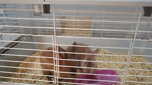 Free Bunnies with cage.