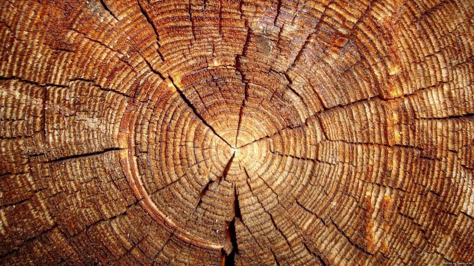 GMS Timber