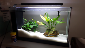 Fluval Spec setup with betta Box Hill North Whitehorse Area Preview