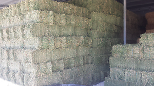 Prime quality lucerne hay for sale East Tamworth Tamworth City Preview