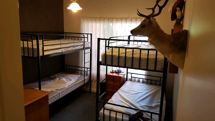 quality bunk beds