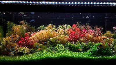 live aquarium plants 25 Stems Cuttings! Colorful And Great Variety!! Beautiful!!