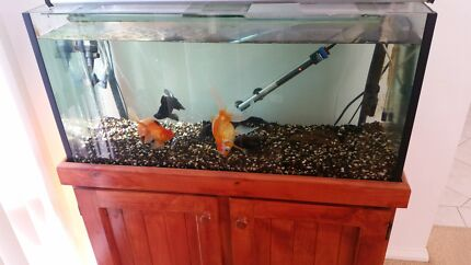 Feng shui aquarium with fish...!!! Amaroo Gungahlin Area Preview