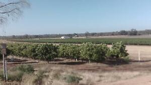 25 ACRES   NEAR  THE  MURRAY RIVER    $180000 . OPEN TO OFFERS . Moorook South Loxton Waikerie Preview