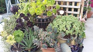 SUCCULENTS, CACTI, GRASSES AND OTHER PLANTS South Launceston Launceston Area Preview