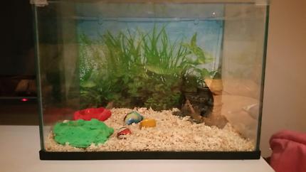 Crazy crab set up