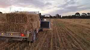 Square oat hay bales Gawler Belt Gawler Area Preview
