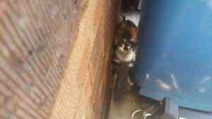 Mother Cat & 2 Kittens = Last call if anyone interested