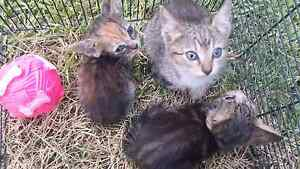 Hi i have cat free Blackett Blacktown Area Preview
