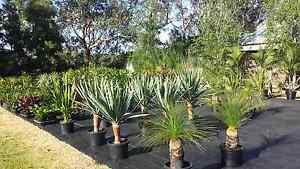 Tropical Plant Clearance SALE Sunday 20th Nov. Kilsyth Yarra Ranges Preview