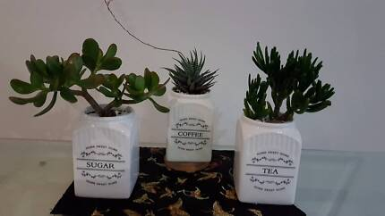 Perfect Succulent Gift.