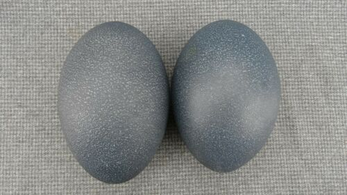 #3 LOT OF TWO (2) EMU EGGS, DRILLED FOR CRAFTS OR DISPLAY