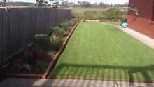 HEALTHY ESTABLISHED PLANTS FOR SALE Portarlington Outer Geelong Preview