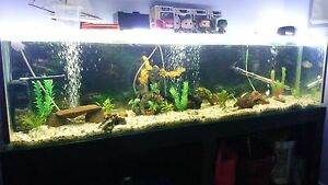 6ft Fish Tank w/ Custom Base and Hood Nairne Mount Barker Area Preview