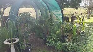 Home Plant Nursery Sale Murwillumbah Tweed Heads Area Preview
