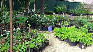 CHEAP PLANTS FOR SALE FROM $2 Marsden Logan Area Preview