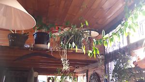 Indoor /outdoor plants Nabowla Dorset Area Preview