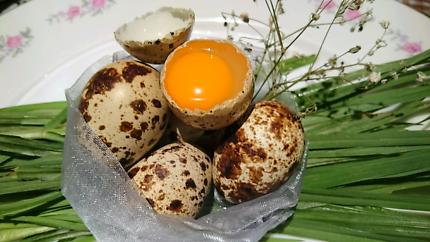 Organic Fertile Quail Eggs