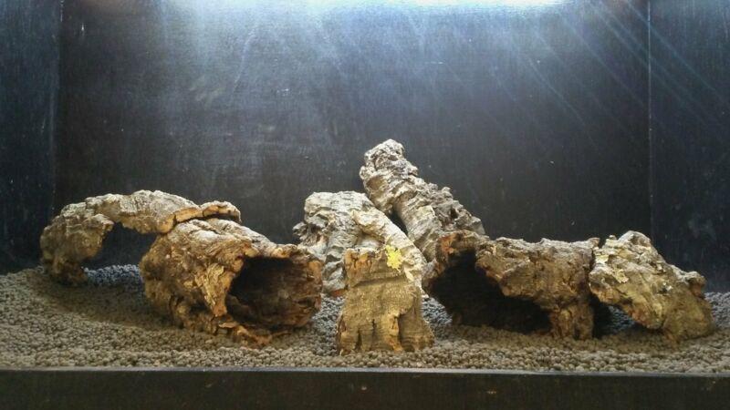 Nano Corkbark | 3/4 lb. Assorted Bulk