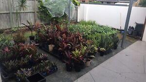 All plants $10 in Benowa